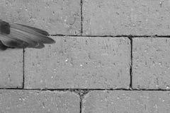 Vogelflügel auf Ziegelsteinen lizenzfreie stockbilder