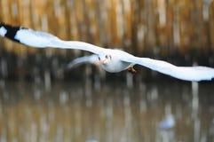 Vogelfliege Stockfoto