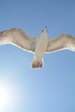 Vogelfliegen vor der Sonne Lizenzfreies Stockfoto