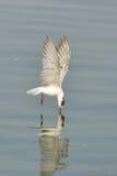 Vogelfoto Royalty-vrije Stock Afbeelding
