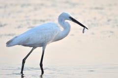 Vogelfoto Royalty-vrije Stock Foto