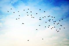 Vogelfoto und die Fliegenvögel Lizenzfreies Stockfoto