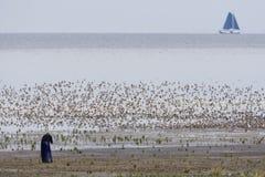Vogelfotograaf, photographe d'oiseau photos libres de droits