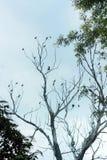 Vogelgemeenschap op een naakte boom Royalty-vrije Stock Afbeelding