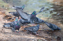 Vogelgetränk Stockfotografie