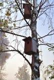 Vogelhäuser auf einem Baum lizenzfreie stockfotos