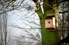 Vogelhaus auf einem Baum lizenzfreies stockbild