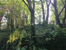 Vogelhaus auf einem Baum, im Wald Stockfotografie