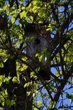 Vogelhaus auf einem Baum unter Laub stockbilder