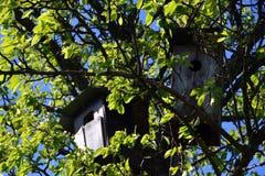 Vogelhaus auf einem Baum unter Laub lizenzfreie stockfotos