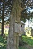 Vogelhaus auf einem Zedernbaum in einem Kirchhof Stockfoto
