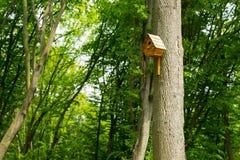 Vogelhaus auf hohem Baum im Park Stockbilder