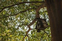 Vogelhaus, das vom Baum mit dem Eingangsloch in Form eines Kreises hängt stockfotografie