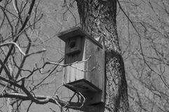 Vogelhaus in den Bäumen Stockbilder