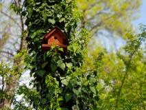 Vogelhaus in einem Wald an einem sonnigen Tag stockfoto