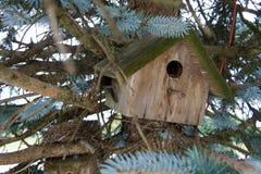 Vogelhaus in einer Kiefer Lizenzfreies Stockbild
