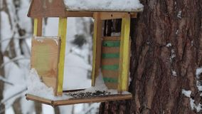 Vogelhaus mit tomtits im Winterwald stock footage
