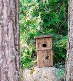Vogelhaus steht auf dem Stein stockfotografie