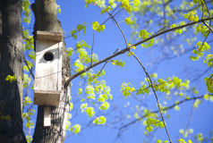 Vogelhaus und junge Frühlingsblätter Stockbilder
