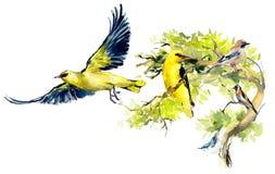 Vogelhintergrund, Rahmen Dekoration mit Szene der wild lebenden Tiere Hand gezeichnete Aquarellillustration lizenzfreies stockfoto