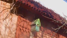 Vogelhuis in de Lente stock videobeelden