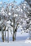 Vogelhuis door Crepe Mirte in sneeuw wordt behandeld die Royalty-vrije Stock Fotografie