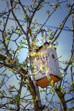 Vogelhuis in een boom Stock Afbeelding