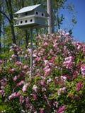 Vogelhuis en Seringen royalty-vrije stock afbeeldingen
