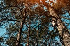 Vogelhuis het hangen op een boom in het hout stock foto