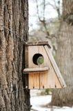 Vogelhuis het hangen van de boom met het ingangsgat in de vorm van een cirkel royalty-vrije stock foto