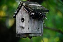 Vogelhuis met vogelsnest binnen op de zomerdag royalty-vrije stock fotografie