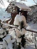 Vogelhuis in mijn sneeuw organische tuin stock foto's
