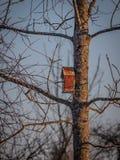 Vogelhuis op de boom die op starlings, op de vooravond van de lente in het bos wachten royalty-vrije stock foto's