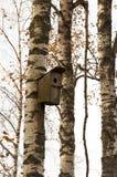 Vogelhuis op een berkboom in een bos Royalty-vrije Stock Afbeeldingen