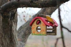 Vogelhuis op een boom stock foto's