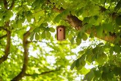 Vogelhuis op een boom in de zomer, tussen groen gebladerte Royalty-vrije Stock Foto