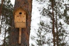 Vogelhuis op een pijnboomboom in wild bos stock fotografie