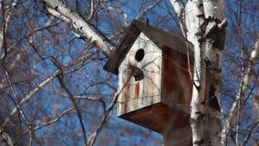 Vogelhuis op een witte berk stock video
