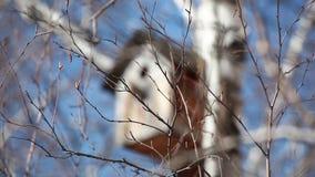 Vogelhuis op een witte berk stock footage