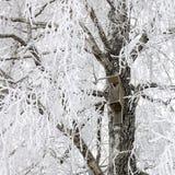 Vogelhuis op sneeuwboom Stock Foto