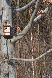 Vogelhuis van hout wordt gemaakt dat Stock Fotografie