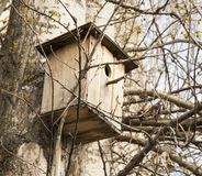 Vogelhuis, vogelvoeder, hulp van mensen tijdens stock afbeelding