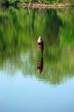 Vogelhuis in water stock fotografie