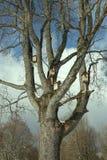 Vogelhuizen op een boom stock afbeeldingen