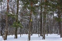 Vogelhuizen voor vogels in de bomen in het de winterbos Royalty-vrije Stock Fotografie