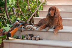 Vogelhund und Trophäen Lizenzfreie Stockfotografie