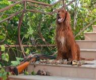 Vogelhund und Trophäen Lizenzfreies Stockbild