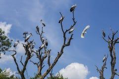 Vogelinsel Stockfoto