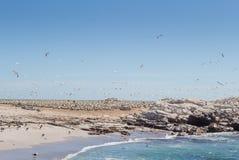 Vogelinsel an Lamberts-Bucht, Westküste Südafrika mit Versammlung von Basstölpeln stockfoto