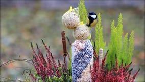 Vogelkohlmeise, die fettes Vogelfutter im Winter einzieht stock footage